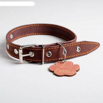 Ошейник кожаный однослойный, 33 - 53 см, 58 х 2.5 см, коричневый