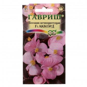 Семена комнатных цветов бегония аккорд f1 вечноцветущая. пробирка, мн, 5 ш