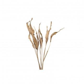 Листья стрелиции натуральные, набор 10 шт