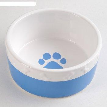 Миска керамическая премиум, бело-синяя