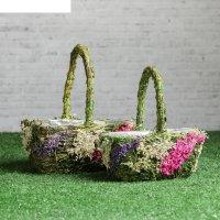 Набор корзин «соцветие», 2 шт, 18x14x9/22 см, 15x10x8/17 см, трава, сухоцв