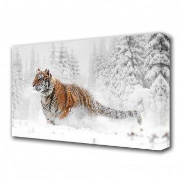 Картина на холсте тигр в снегу
