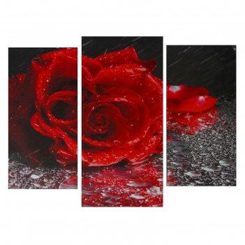 Картина модульная роза под дождём 2шт-25х50, 1шт-30х60 ;60*80 см