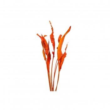 Листья стрелиции красные, набор 10 шт