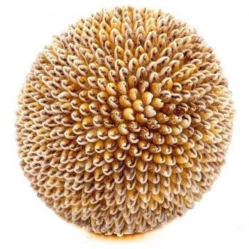 Декоративное украшение из ракушек шар, d14 см