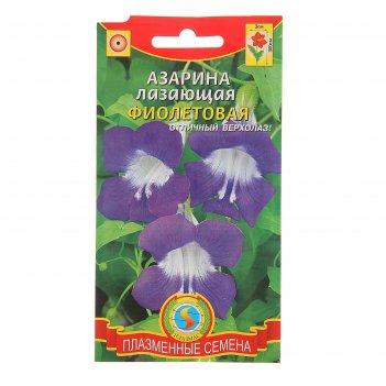 Семена цветов азарина лазающая, фиолетовая, о, 10 шт