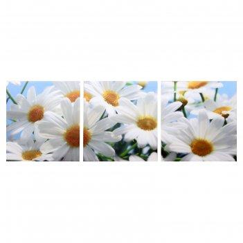Модульная картина белые ромашки (3-35х35) 35х105 см