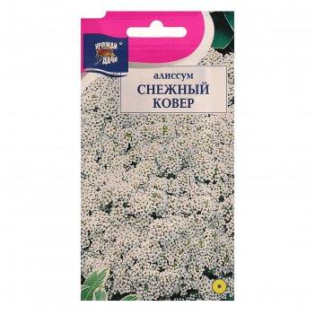 Семена цветов цв алиссум снежный ковер,0,1 гр