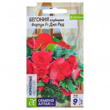 Семена комнатных цветов бегония фортун дип ред клубневая, мн, цп, 5 шт.