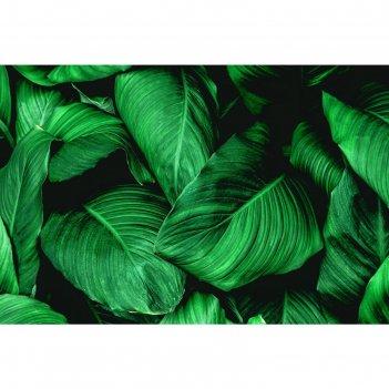 Фотобаннер 250 х 200 см, с фотопечатью большие листья 1