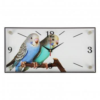 Часы настенные, серия: животный мир, парочка попугаев, 19х39 см