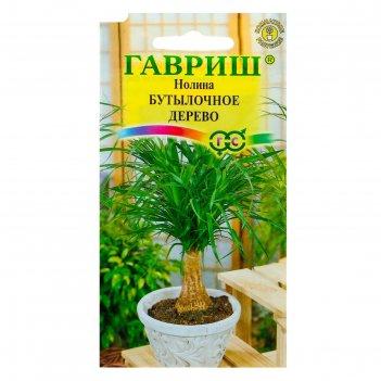 Семена комнатных растений нолина бутылочное дерево, мн., 3 шт.