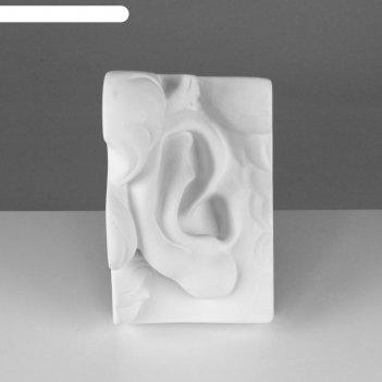 Гипсовая фигура, ухо давида правое «мастерская экорше», 16х14,5х24,5 см