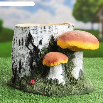 Кашпо пень берёзовый с грибами