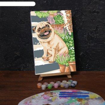 Картина по номерам на холсте с подрамником «мопс» 20х30 см