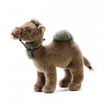 Мягкая игрушка верблюд, 22 см 3963