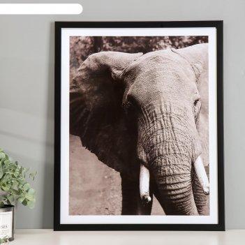 Постер пластик слон 40х50 см