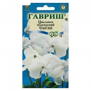 Семена цветов цикламен чарли, персидский, 3 шт