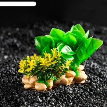 Растение искусственное аквариумное на подставке под камень, 12 х 12 х 6 см