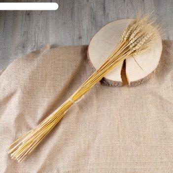 Букет для творчества колосья пшеницы