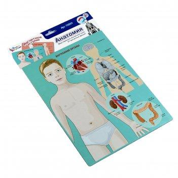 Настольная игра магнитная анатомия 03820