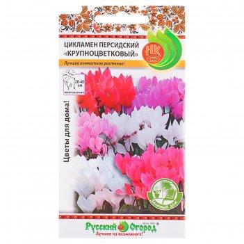 Семена комнатных цветов цикламен персидский крупноцветковый зеленый дом, м