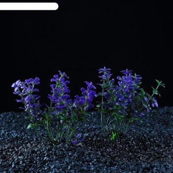 Набор растений искусственных для аквариума (2 шт), 10 см