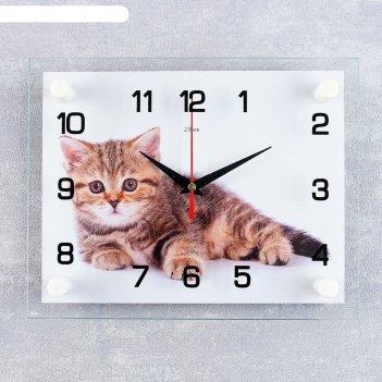 Часы настенные, серия: животный мир, котенок, 20х26  см, микс