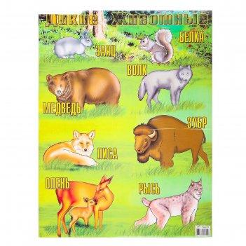 Постер дикие животные а2
