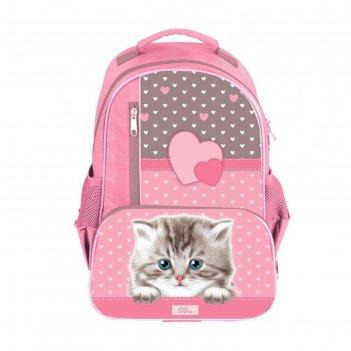 Рюкзак школьный с эргономичной спинкой, calligrata, 37 х 26 х 13, «котёнок