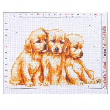 Канва для вышивания с рисунком «щенки», 28 х 37 см