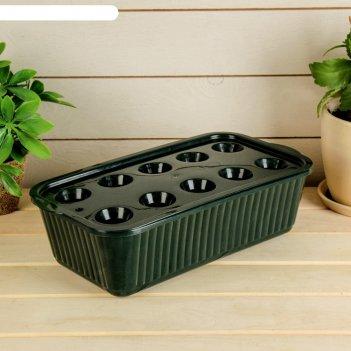 Лоток для выращивания зелёного лука, 29 x 16 x 8,5 см, тёмно-зелёный